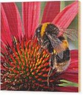 Bee On Red Coneflower 2 Wood Print