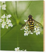 Bee On Top Of The Flower - Featured 3 Wood Print