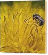 Bee Pollen Wood Print