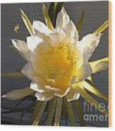 Bee Pollinating Dragon Fruit Blossom Wood Print