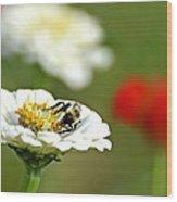 Bee Red-y Wood Print