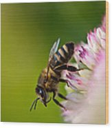Bee Sitting On A Flower Wood Print