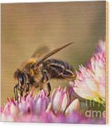 Bee Sitting On Flower Wood Print