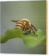 Bee Still Wood Print