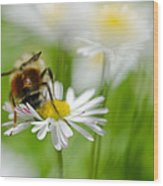 Bee The Daisy Wood Print