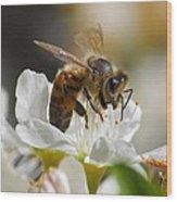 Bee4honey Wood Print