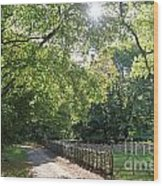 Beech Avenue Britain Wood Print