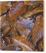 Beech (fagus Sp.) Leaves Wood Print