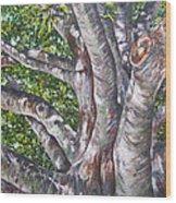 Beech Wood Print