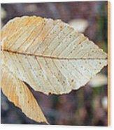 Beech Leaf In Winter Wood Print