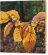 Beech Leaves In Winter Wood Print
