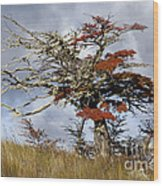 Beech Tree, Chile Wood Print