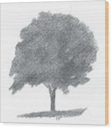 Beech Tree Drawing Number Two Wood Print by Alan Daysh