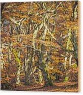 Beech Tree Group In Autumn Light Wood Print