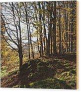 Beech Trees - Autumn Wood Print