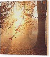 Beech Trees Uppland Sweden Wood Print