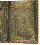 Beech Wood Walk Wood Print