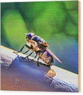 Beeing Nice By Diana Sainz Wood Print