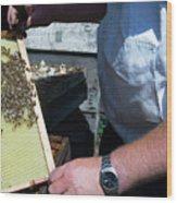 Beekeeper Holding A Brood Frame Wood Print