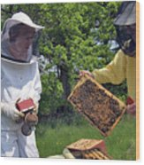 Beekeepers Inspecting A Beehive Wood Print