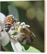 Bee's Wood Print