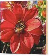 Bee's Dahlia Delight Wood Print