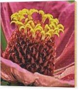 Bee's-eye View Wood Print