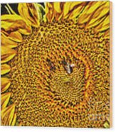 Bees On Sunflower Hdr Wood Print
