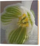 Bee's View Of A Snowdrop Wood Print