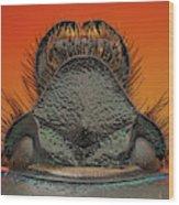 Beetle 41 Wood Print