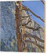 Beetle Barren Pine Wood Print