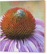 Beetle Bug Wood Print