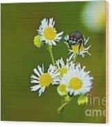 Beetle Life Wood Print