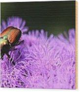 Beetle On A Flower Wood Print