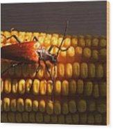 Beetle On Corn Ear Wood Print