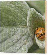Beetle Pad Wood Print