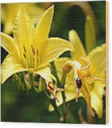 Beetle Resting On Yellow Lily Flower Wood Print