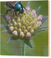 Beetle Sitting On Flower Wood Print