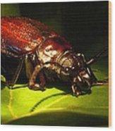 Beetle With Powerful Mandibles Wood Print