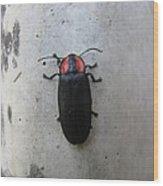 Beetlebug's Stroll Wood Print
