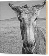 Begging Burro Wood Print