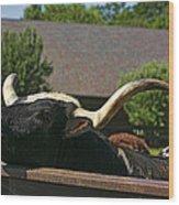 Begging Cow Wood Print