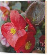 Begonia 20140706-1 Wood Print