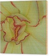 Begonia 4 Wood Print