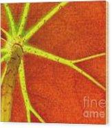 Begonia Branch Wood Print