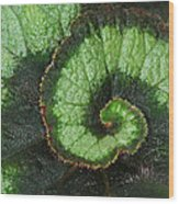 Begonia Leaf 2 Wood Print