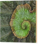 Begonia Leaf Wood Print