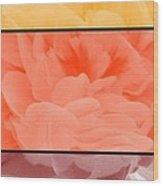 Begonia Petals Triptych Wood Print