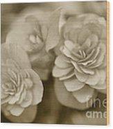 Begonias In Sepia Wood Print