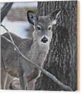 Behind A Branch Wood Print